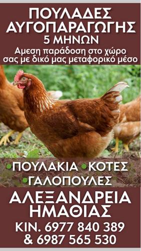 Kotopoula